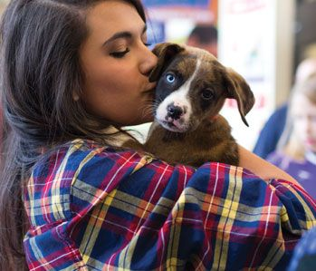 Giving Back To The Community Petsmart Puppy Adoption Charity