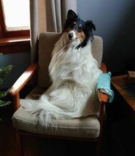 History S Famous Dogs Famous Dogs Dog Shaming Rough Collie