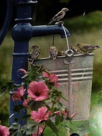 Birdbath Birds Bird Houses Old Water Pumps