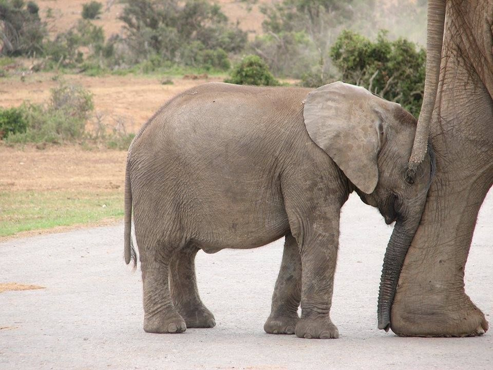 Me Tired In 2020 Animals Beautiful Elephant Save The Elephants