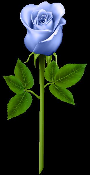 Blue Rose Transparent Png Image Beautiful Rose Flowers Blue Flower Wallpaper Digital Flowers