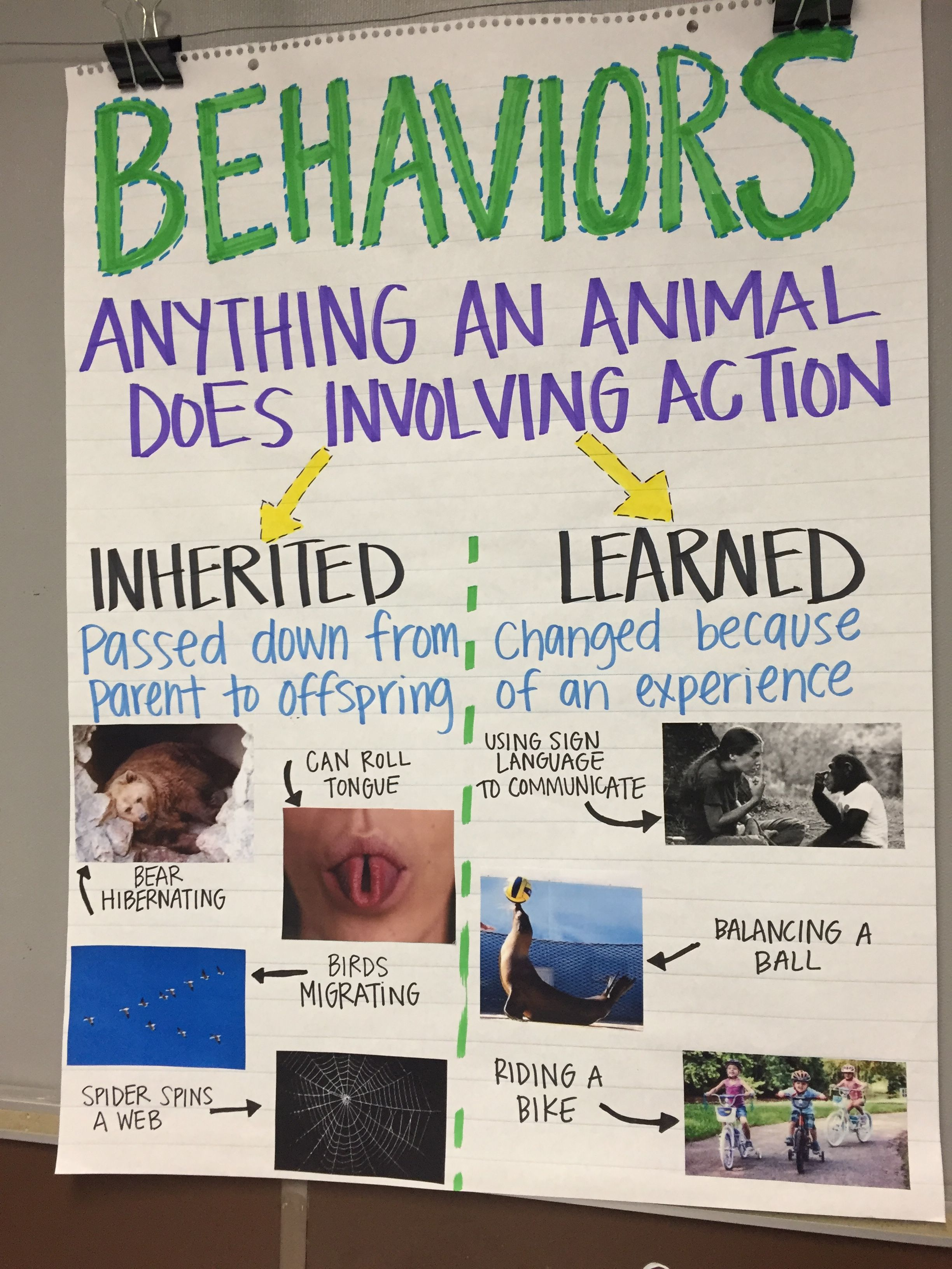 Inherited Traits/ Behaviors Anchor Chart   Science anchor charts 5th grade [ 3264 x 2448 Pixel ]