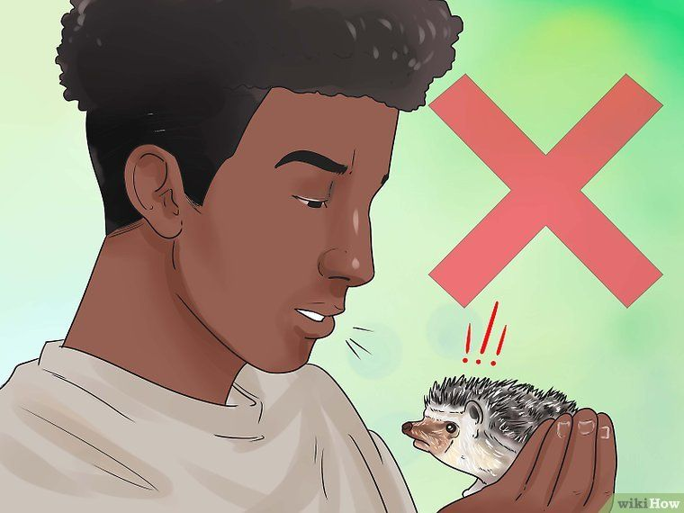 How to react when your hedgehog bites you with pictures