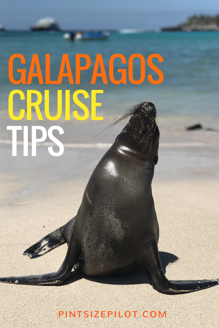 Considering a Galapagos Island cruise? Check out our Galapagos tips and travel suggestions from our Galapagos Islands family vacation. #Galapago #GalapagosIslands