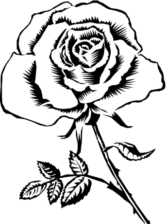 Coloring Sheet Of A Flower : Rose flower coloring page free for use illustrations