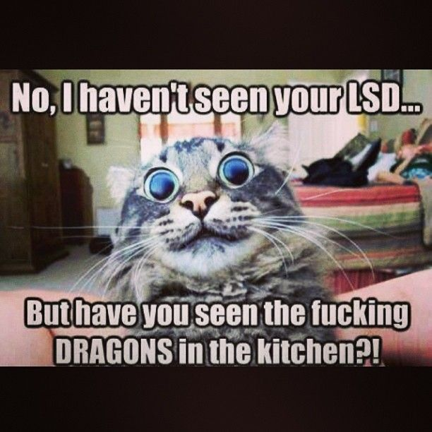 Dragons In The Kitchen Funny Pinterest Dragons