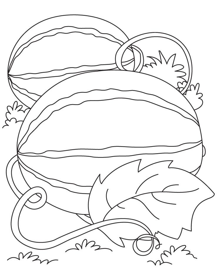 Watermelon Coloring Pages Watermelon Coloring Page 1  Cute