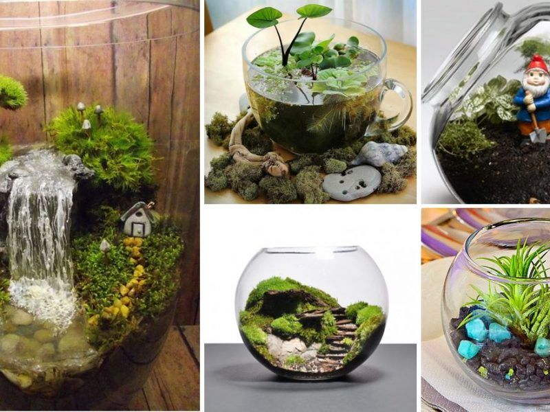 Photo of 10+ Coolest Small Terrarium Ideas [#5 Is Gorgeous] – Or