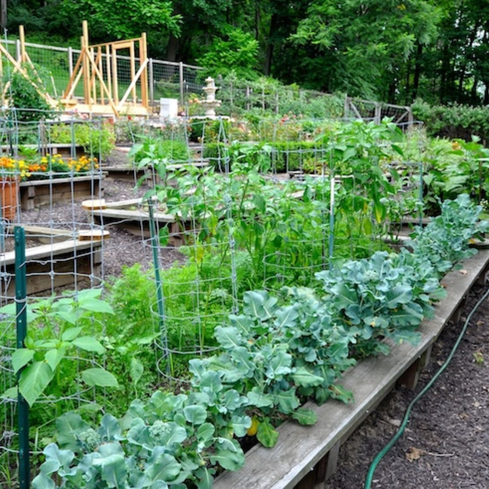Back Yard Potager: Take A Tour Through A Colorful Backyard Victory Garden