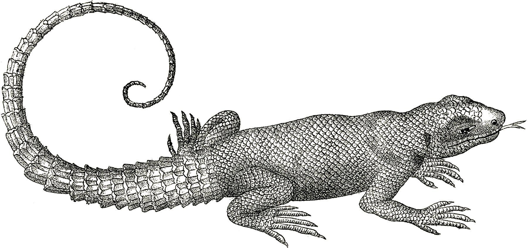 4 Lizard Clipart Images Graphics Fairy Lizard Animal Clipart