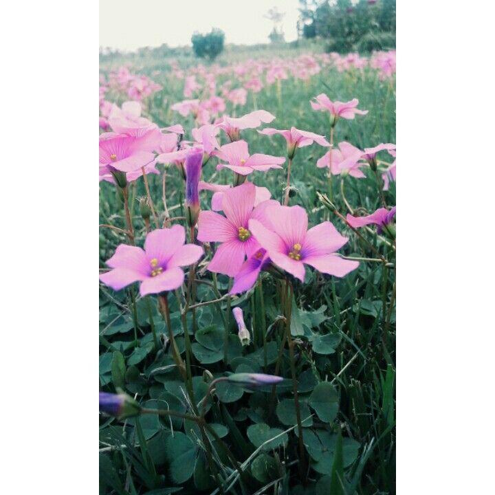 Flores~ Canelones(Uruguay)