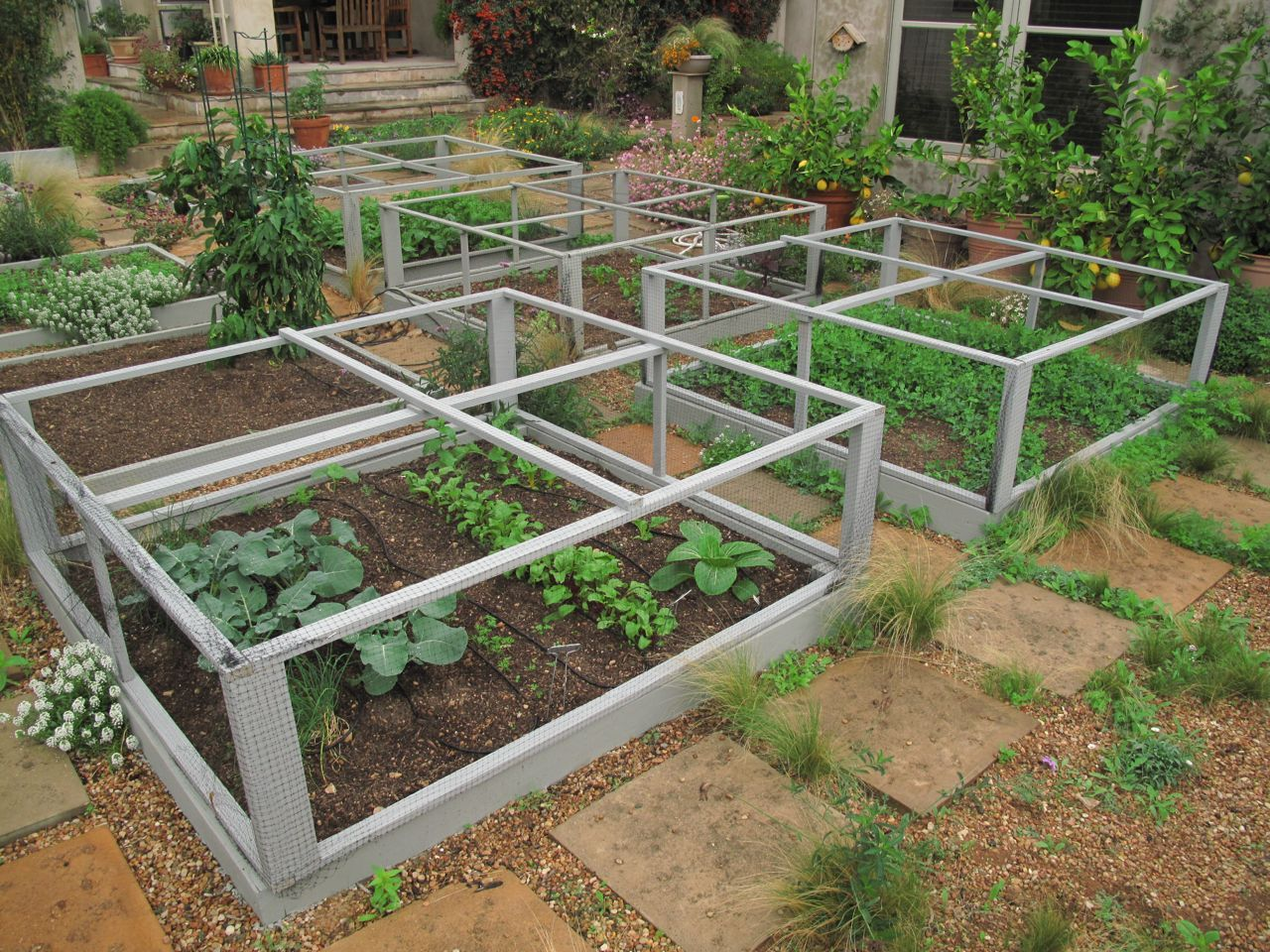 Square Foot Gardeing Raised Bed Gardening Protected With Screened Frames Emergency