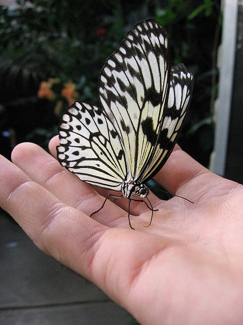 This butterfly landed in my hand lucky to get this shot