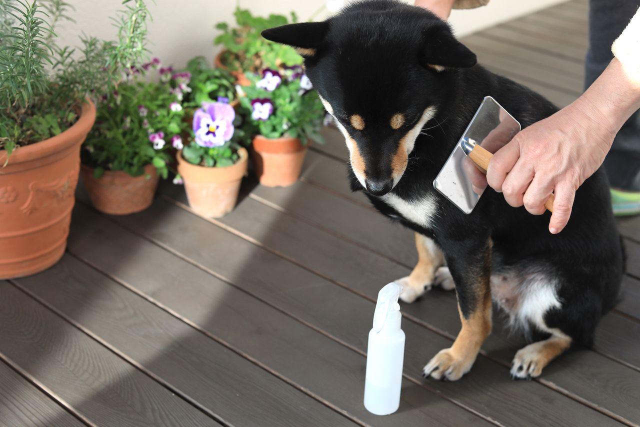 愛犬のブラッシングの時にも使える静電気防止スプレーの作り方 スプレー バラ 栽培 静電気 防止