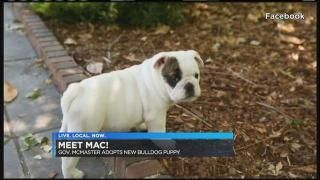 Governor McMaster adopts new bulldog puppy  Warren Stocker -- there are plenty of beautiful healthy Bulldog puppies in shelters?