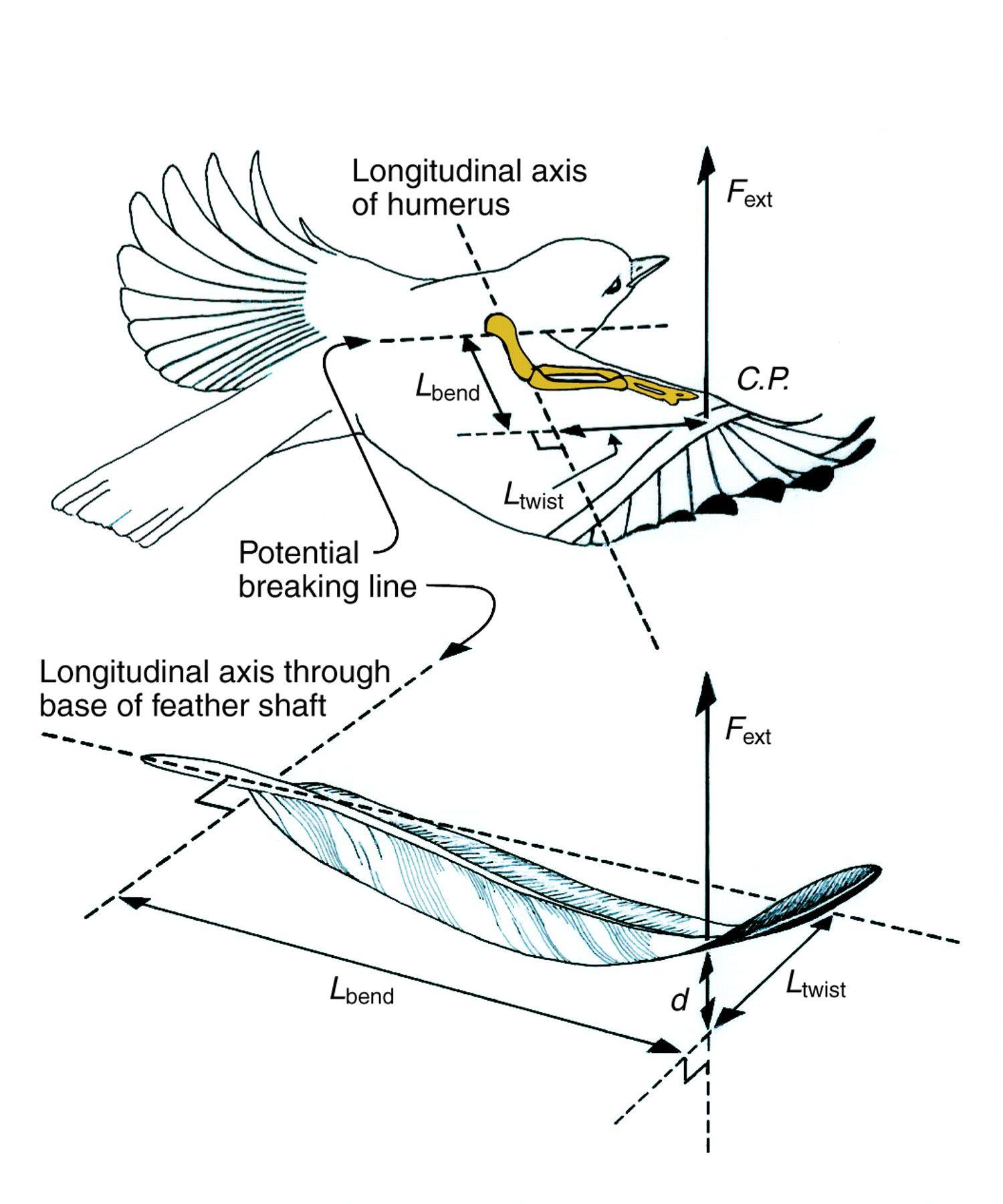 efficient structures in torsion