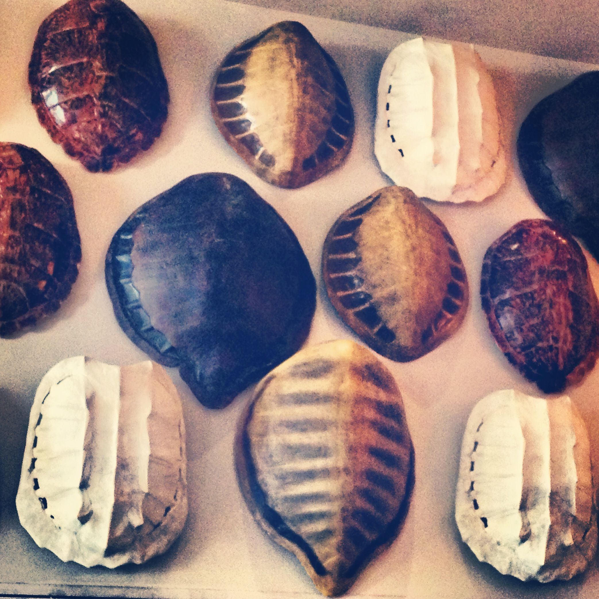 Turtle shell wall decor | Home | Wall decor, World of ...