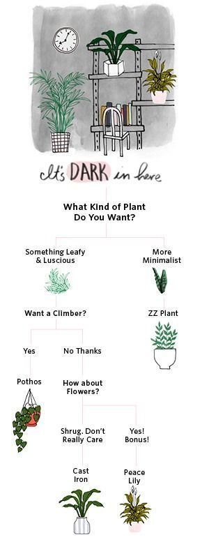 Photo of What to Expect When Becoming a Plant Parent