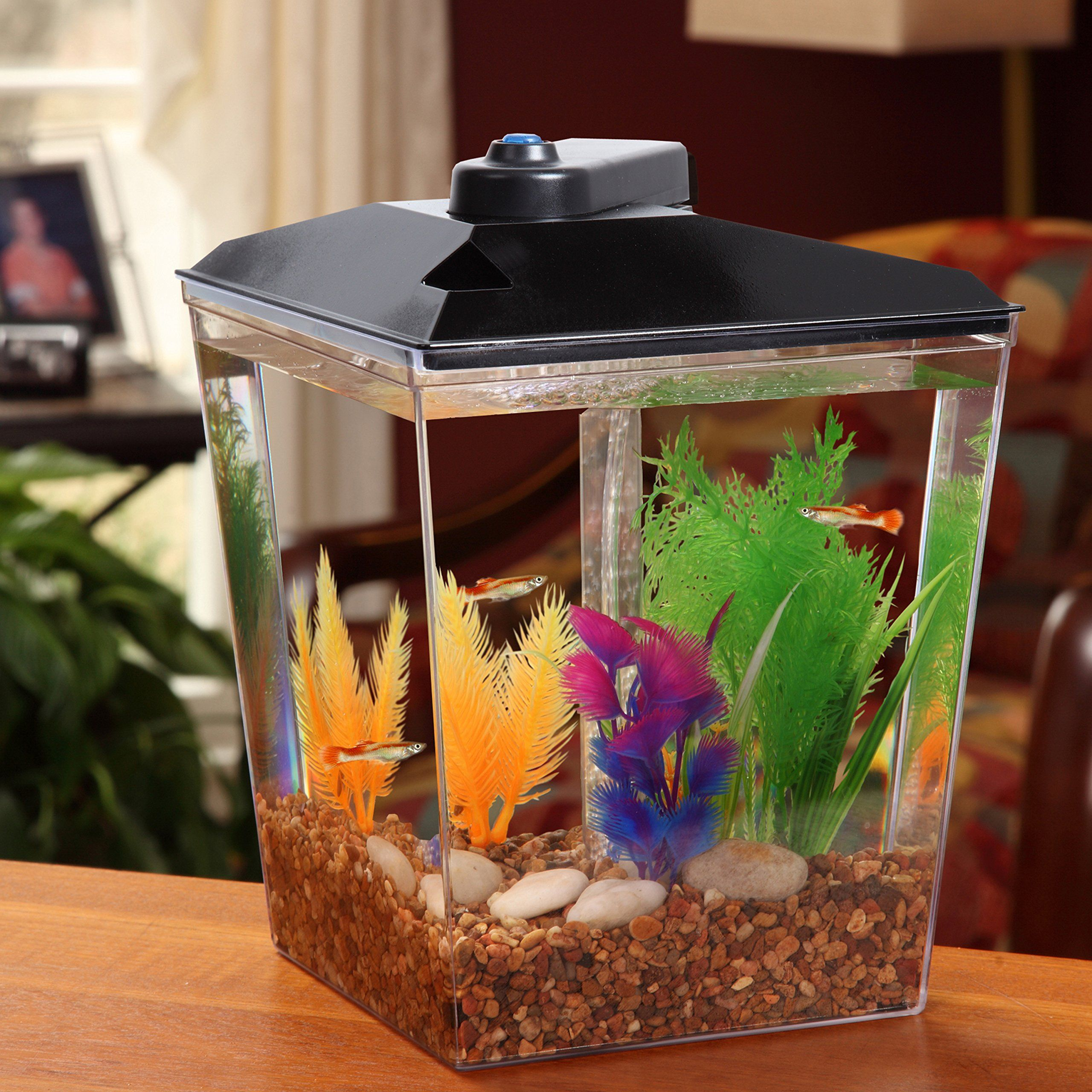 Kollercraft 1 Gallon Corner View Aquarium With Under Gravel Filter System Check Out The Image By Visiting Th Hermit Crab Habitat Best Aquarium Fish Aquarium