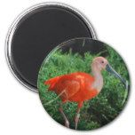 Awesome ibis bird magnets