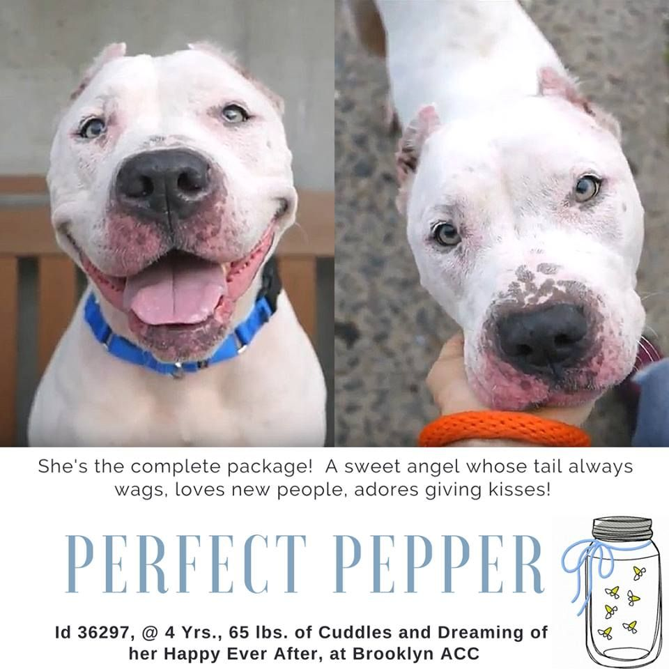 Image May Contain 1 Person Dog And Text Pet Adoption Nyc Dogs