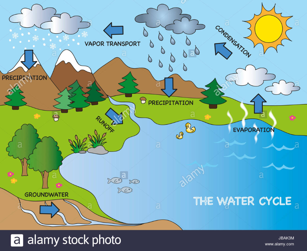 Water Cycle Diagram Png Diagram Drawing Ecosystem Diversity Evaporation Fotolia In 2020 Water Cycle Diagram Water Cycle Cycling Design