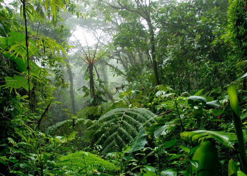 Forests about indian forests indian forests are the