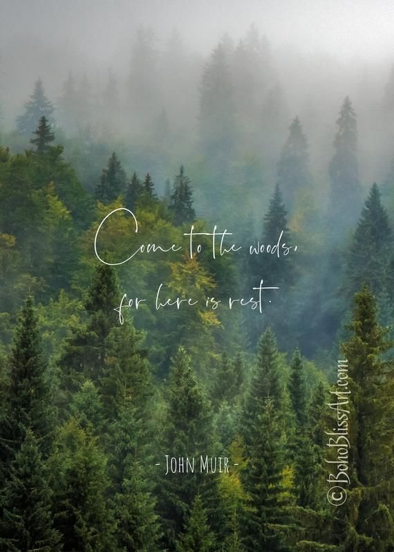 John Muir Quote: Come to the woods, for here is re