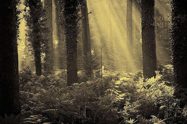 Forest Light Forest Light Scenic Landscape Photo Tree