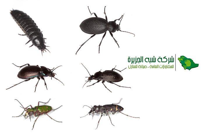 طرق الوقاية من الحشرات الضارة افضل شركات رش مبيدات حشرية بالرياض يستخدم في الوقاية من الحشرات او القضاء عليها نهائيا داخل المنزل وبا Pest Control Pests Animals