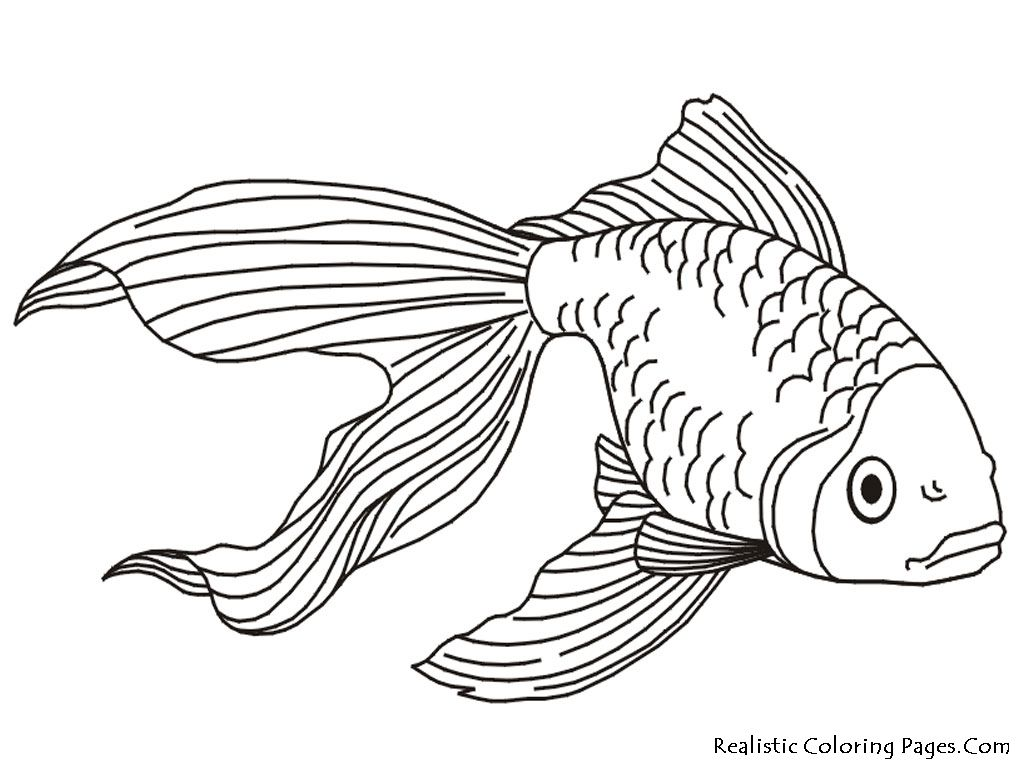 Pin by gaby aubin on Goldfish  Fish coloring page, Animal