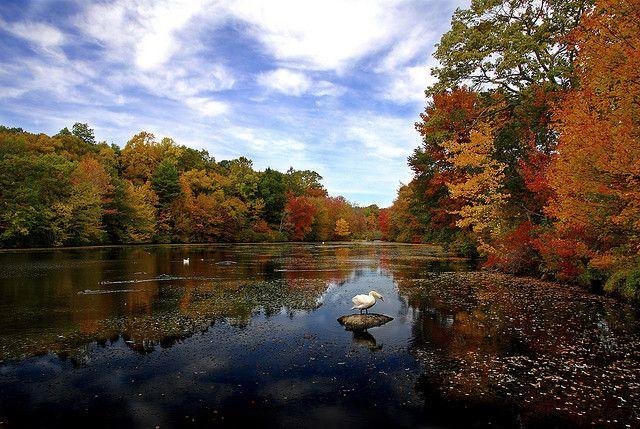 Swan in autumn by slack12, via Flickr