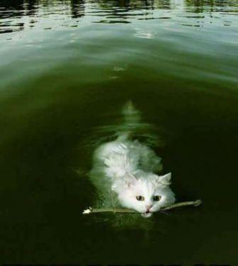 Природа.   Товары для животных, Сумасшедшие кошки, Самые ...