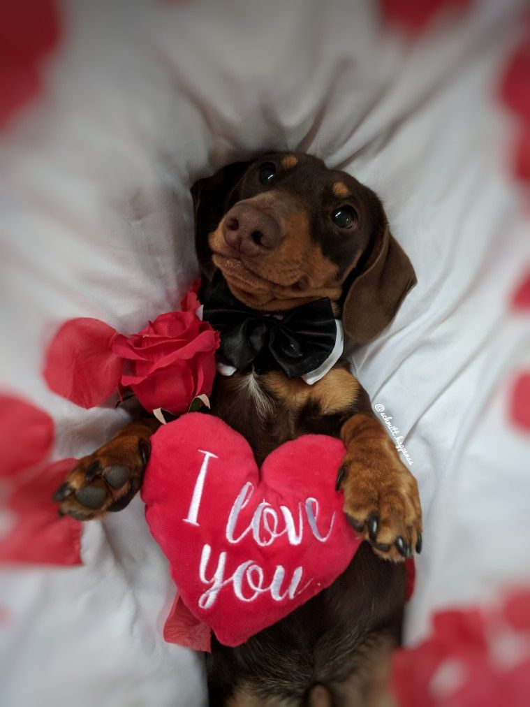 Valentine S Day With Images Dogs And Puppies Cute Dog