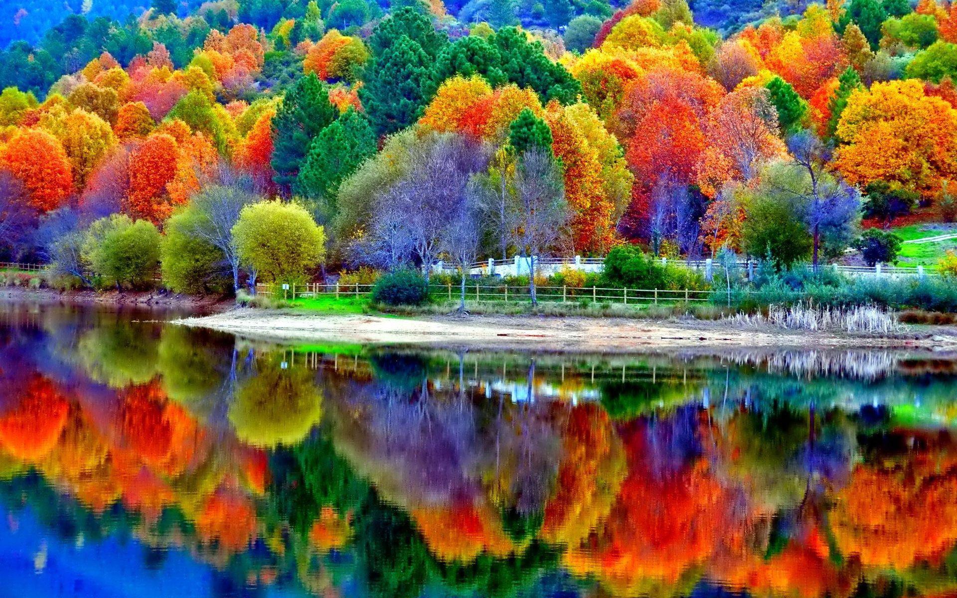 Nature 1920x1200 Forest Lake Water Tree Hd 4k 1080p Wallpaper Hdwallpaper Desktop Landscape Wallpaper Autumn Scenery Scenery Wallpaper