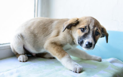 How to Raise a WellBehaved Puppy Australian Dog Lover