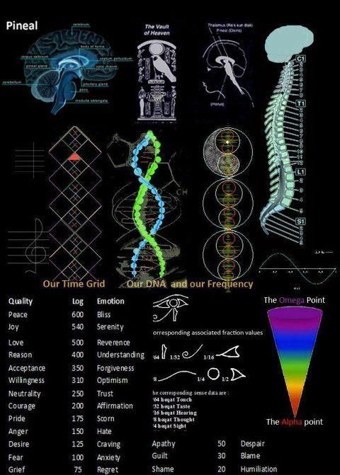 5d24788ea8ffe99fdc81721317bc7009 the pineal gland or 3rd eye, chakras and kundalini are all elements
