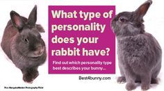 All rabbits are full of personality & character, but which one is your rabbit? Find out which personality suits your bunny here