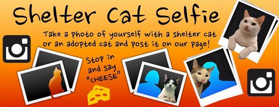Cherokee County Animal Shelter S Facebook Cover Asking For Pix Of