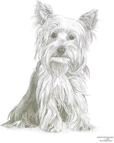 Yorkshire Terrier 1 Yorkie Dog Limited Edition Pencil