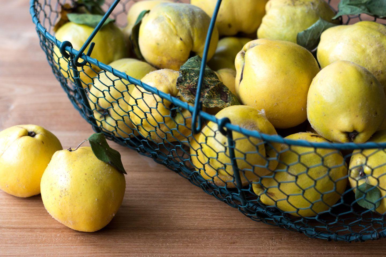 Quittensorten: Wie unterscheiden sich Apfel- & Birnenquitten? #Äpfelverwerten Quittensorten: Wie unterscheiden sich Apfel- & Birnenquitten? #Äpfelverwerten