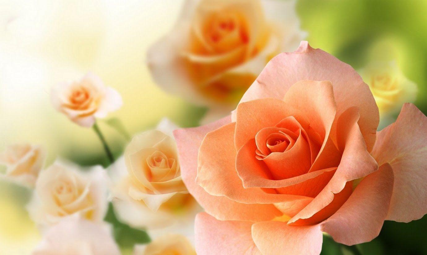 Физкультурника, онлайн открытки цветов