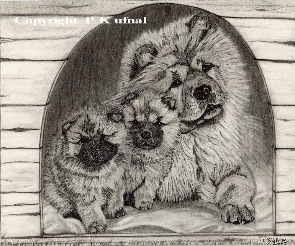 Details About Dog Art Pencil Ink Chow Chow Puppies Print By