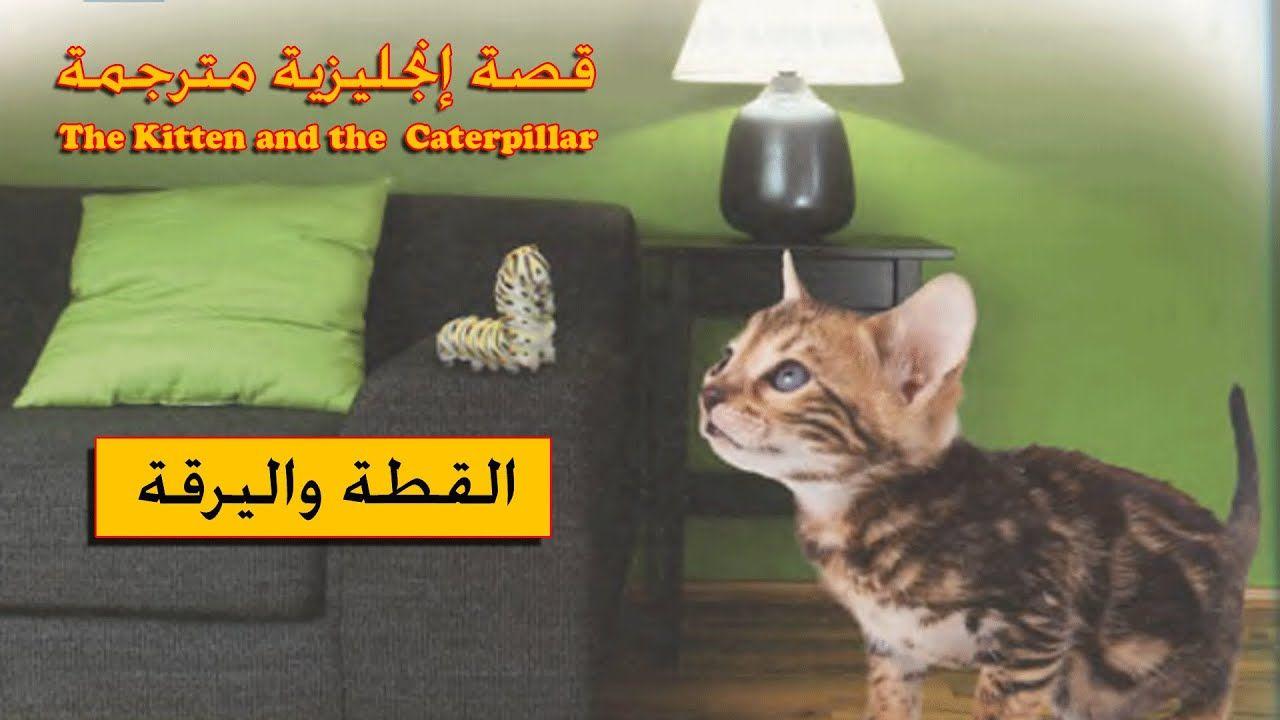 Pin By Nemer Jarada On English Club Cats Kitten Animals