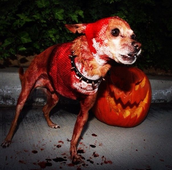 A dog/spider hybrid that is best not to bump into in the middle of the night. & 9 genuinely terrifying Halloween dog costumes | Pinterest