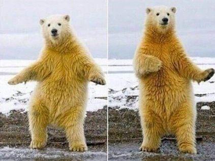 cute dancing polar bear