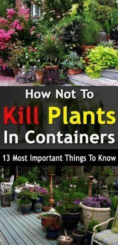 How Not to Kill Container PlantsGreat info How Not to Kill Container Plants Join Succulent Of The Month Club Order plant babies Feel overjoyed by their beauty Do literall...
