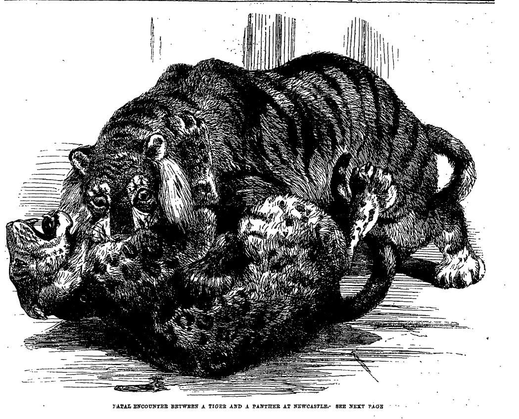 Fatal fight between Tiger and Pather; January 4 1862