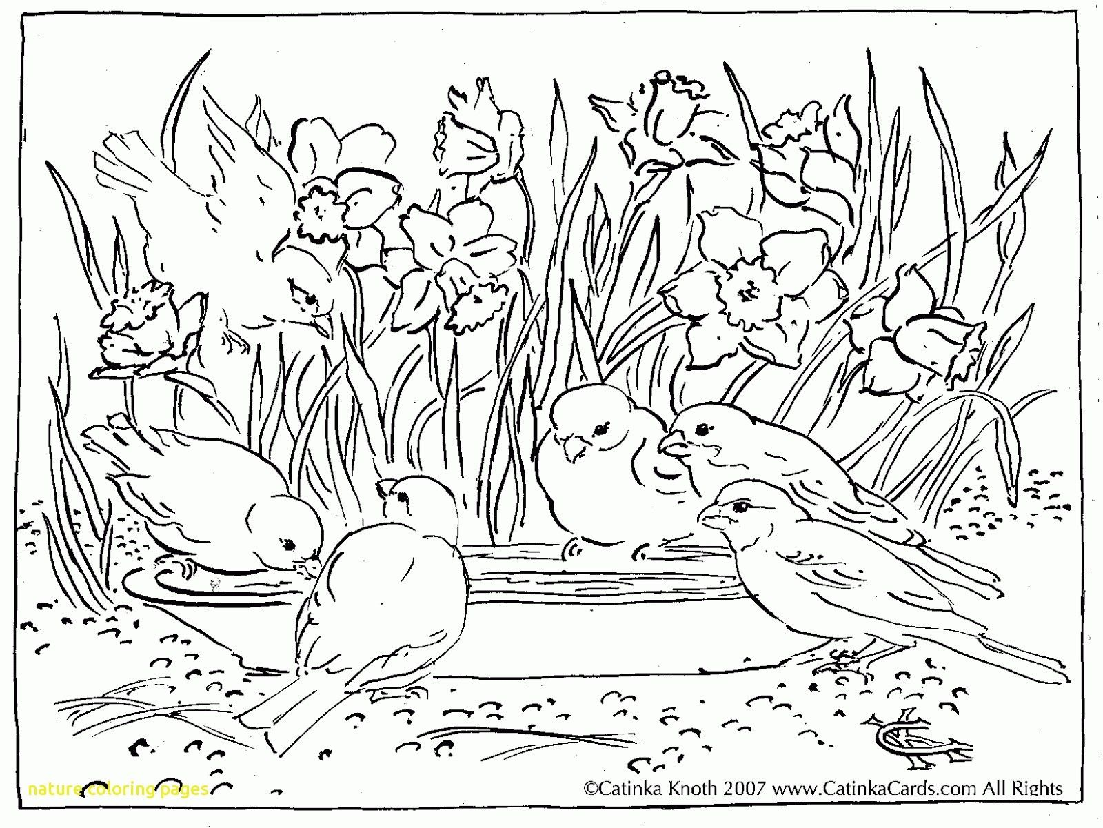 Nature Coloring Pages Refrence Nature Coloring Pages With Drawn