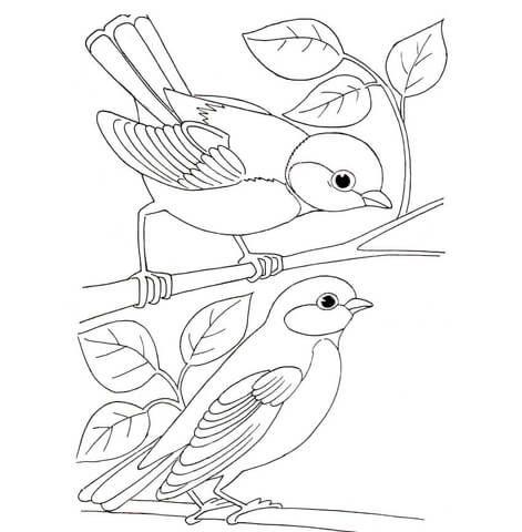 Dibujo De Carboneros Para Colorear Dibujos Para Colorear Imprimir Gratis Paginas Para Colorear De Animales Patrones De Bordado Patrones De Aves